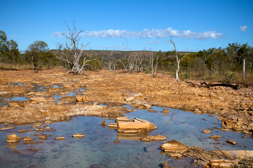 Dead trees as a result of Acid Mine Drainage from Redbank Mine, © Phoebe Barton / MPI 2011